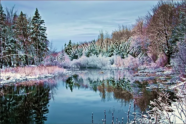 CANADA;PRINCE EDWARD ISLAND;PRINCE COUNTY;WELLINGTON;WINTER;FROST;WATER;REFLECTION;WINTERSCAPE;WATERSCAPE;LANDSCAPE;SCENIC;HORIZONTAL