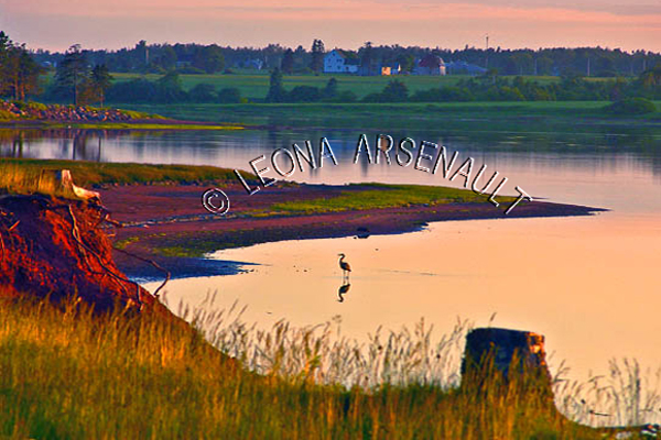 CANADA;PRINCE EDWARD ISLAND;PRINCE COUNTY;GREEN PARK;SILHOUETTE;SUNSET;DUSK;BLUE HERON;BIRD;RED SOIL;SHORE;BEACH;LANDSCAPE;WATERSCAPE;SCENIC;HORIZONTAL