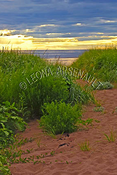 CANADA;PRINCE EDWARD ISLAND;PRINCE COUNTY;MAXIMEVILLE;BEACHES;SUMMERS;RED SOIL;WATER;SAND;SUNSETS;WATERSCAPE;SCENIC;VERTICAL