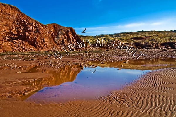 CANADA;PRINCE EDWARD ISLAND;PRINCE COUNTY;MAXIMEVILLE;BEACHES;SUMMERS;RED SOIL;WATER;SAND;CLIFFS;BIRDS;SEAGULLS;BEACH;WATERSCAPE;SCENIC;HORIZONTAL
