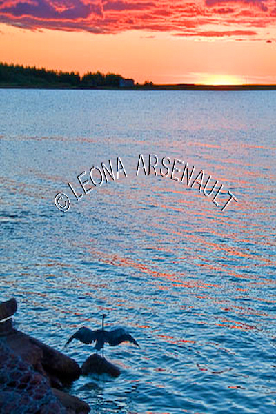 CANADA;PRINCE EDWARD ISLAND;PRINCE COUNTY;ABRAM-VILLAGE;SUNSETS;SILHOUETTES;BLUE HERONS;BIRDS;NAUTICAL;WATER;NIGHTSCAPE;SEASCAPE;VERTICAL