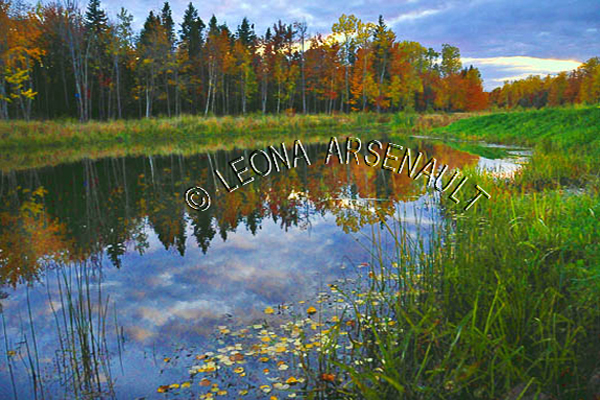 CANADA;PRINCE EDWARD ISLAND;PRINCE COUNTY;WELLINGTON;FALL;FALL COLORS;LEAVES;WATER;REFLECTIONS;WATERSCAPE;LANDSCAPE;SCENIC;HORIZONTAL