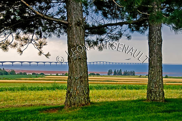 CANADA;PRINCE EDWARD ISLAND;PRINCE COUNTY;NORTH CARLETON;CONFEDERATION BRIDGE;BRIDGES;GRAIN FIELDS;FIELDS;PASTURES;SUMMER;AGRICULTURE;FARMING;WATERSCAPE;LANDSCAPE;SCENIC;HORIZONTAL