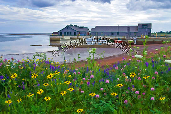 CANADA;PRINCE EDWARD ISLAND;QUEEN'S COUNTY;VICTORIA BY THE SEA;LIGHTHOUSE;BOATS;BUILDINGS;FLOWERS;WILD FLOWERS;HARBOURS;PIERS;WHARFS;SAND;BEACHES;NAUTICAL;WATER;SUMMER;WATERSCAPE;LANDSCAPE;SCENIC;HORIZONTAL