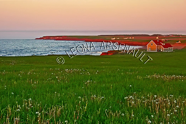 CANADA;PRINCE EDWARD ISLAND;QUEEN'S COUNTY;PARK CORNER;LUPINS;FLOWERS;CLIFFS;SUNSETS;BEACH;DUSK;WATER;SUMMER;WATERSCAPE;LANDSCAPE;SCENIC;HORIZONTAL