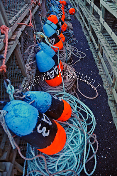 CANADA;PRINCE_EDWARD_ISLAND;PRINCE_COUNTY;HIGGINS_WHARF;VICTORIA_WEST;BUOYS;FISH