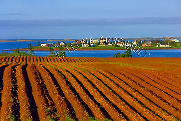 CANADA;PRINCE EDWARD ISLAND;QUEEN'S  COUNTY;POTATO FIELDS;FIELDS;HEBRIDES;WATER;SUMMER;WATERSCAPE;LANDSCAPE;SCENIC;HORIZONTAL