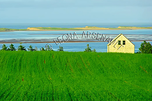 CANADA;PRINCE EDWARD ISLAND;QUEEN'S  COUNTY;SPRINGBROOK;FIELDS;FARMING;AGRICULTURE;WATER;SUMMER;WATERSCAPE;LANDSCAPE;SCENIC;HORIZONTAL