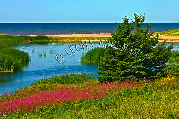 CANADA;PRINCE EDWARD ISLAND;KING'S COUNTY;NORTHSIDE ROAD;FLOWERS;WILD FLOWERS;WATER;SUMMER;WATERSCAPE;LANDSCAPE;SCENIC;HORIZONTAL