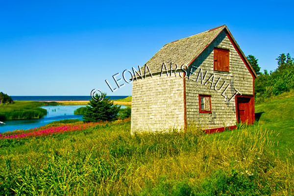 CANADA;PRINCE EDWARD ISLAND;KING'S COUNTY;NORTHSIDE ROAD;FLOWERS;WILD FLOWERS;WATER;SUMMERS;SHEDS;SHACKS;WATERSCAPE;LANDSCAPE;SCENIC;HORIZONTAL