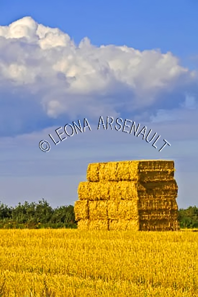CANADA;PRINCE EDWARD ISLAND;PRINCE COUNTY;URBAINVILLE;AGRICULTURE;FARMING;HAY BALES;HAY FIELDS;FIELDS;CROPS;SUMMER;LANDSCAPE;VERTICAL