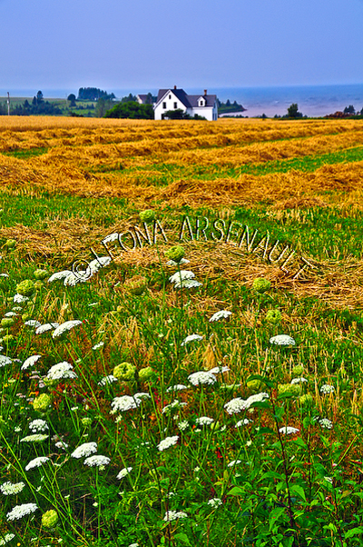 CANADA;PRINCE EDWARD ISLAND;QUEEN'S COUNTY;DESABLE;AGRICULTURE;FARMING;HAY FIELDS;FIELDS;SUMMER;LANDSCAPE;SCENIC;VERTICAL
