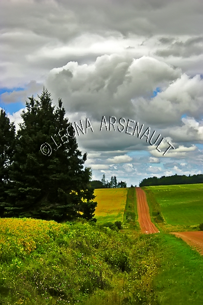 CANADA;PRINCE EDWARD ISLAND;QUEEN'S COUNTY;VERNON BRIDGE;RED CLAY ROAD;PATH;AGRICULTURE;FARMING;SOYBEAN FIELDS;FIELDS;CLOUDS;SUMMER;LANDSCAPE;SCENIC;VERTICAL