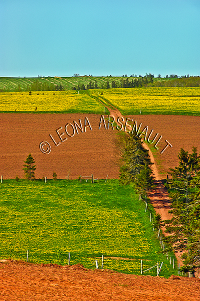 CANADA;PRINCE EDWARD ISLAND;QUEEN'S COUNTY;HUNTER RIVER;AGRICULTURE;FARMING;GRAIN FIELDS;FIELDS;PASTURES;RED CLAY ROAD;PATH;SUMMER;LANDSCAPE;SCENIC;VERTICAL