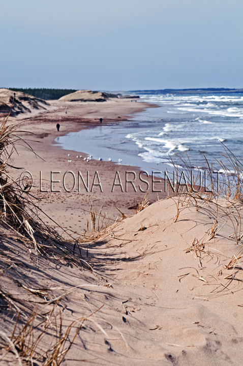 CANADA,PRICE EDWARD ISLAND,QUEEN'S COUNTY,CAVENDISH,CAVENDISH BEACH,BEACH,SUMMER,WATER,LANDSCAPE,SCENIC,SAND DUNES,SAND,,HORIZONTAL,NATIONAL PARK