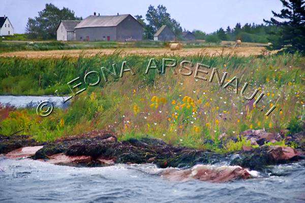 CANADA;PRINCE EDWARD ISLAND;PRINCE COUNTY;ABRAM-VILLAGE;OLD BARNS;BARNS;BUILDINGS;WATER;ROCKS;FLOWERS;SUMMER;SCENIC;LANDSCAPE;WATERSCAPE;HORIZONTAL