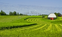 CANADA;PRINCE_EDWARD_ISLAND;QUEENS_COUNTY;BUILDINGS;_BARNS;FARMING;HAY_FIELDS;FI