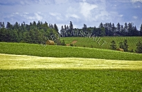 CANADA;PRINCE_EDWARD_ISLAND;QUEENS_COUNTY;POTATO_FIELDS;PASTURES;GRAIN_FIELDS;FI