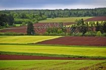 CANADA;PRINCE_EDWARD_ISLAND;PRINCE_COUNTY;KINKORA;FIELDS;GRAIN_FIELD;POTATO_FIEL