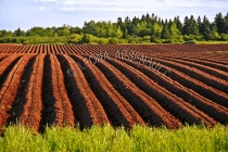 CANADA;PRINCE_EDWARD_ISLAND;PRINCE_COUNTY;CLERMONT;POTATO_FIELD;FIELD;RED_SOIL;F