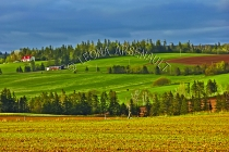 CANADA;PRINCE_EDWARD_ISLAND;QUEENS_COUNTY;DESABLE;GRAIN_FIELDS;FIELDS;PASTURES;F