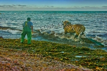 CANADA;PRINCE_EDWARD_ISLAND;PRINCE_COUNTY;NORTH_CAPE;MOSS_FISHING;HORSE;HARVESTI