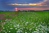 CANADA;PRINCE_EDWARD_ISLAND;PRINCE_COUNTY;ABRAM_VILLAGE;SUNSET;DUSK;WATER;FLOWER