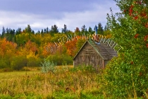 CANADA;PRINCE_EDWARD_ISLAND;PRINCE_COUNTY;ABRAM_VILLAGE;FALL;SHED;FALL_COLORS;LA