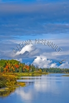 CANADA;PRINCE_EDWARD_ISLAND;PRINCE_COUNTY;DAYS_CORNER;FALL;WATER;SEAGULLS;BIRDS;