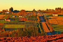 CANADA;PRINCE_EDWARD_ISLAND;QUEENS_COUNTY;PISQUID;FIELDS;GRAPE_CROP;FARMING;AGRI