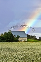 CANADA;PRINCE_EDWARD_ISLAND;QUEENS_COUNTY;HUNTER_RIVER;RAINBOW;AGRICULTURE;FARMI
