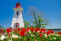 CANADA;PRINCE_EDWARD_ISLAND;QUEENS_COUNTY;VICTORIA_BY_THE_SEA;LIGHTHOUSES;FLOWER
