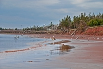 CANADA;PRINCE_EDWARD_ISLAND;PRINCE_COUNTY;CAPE_EGMONT;BEACHES;CLIFFS;WATER;SEASC