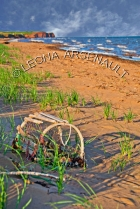 CANADA;PRINCE_EDWARD_ISLAND;PRINCE_COUNTY;MAXIMEVILLE;WATER;BEACHES;SUMMER;LOBST