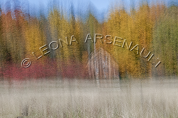 IMPRESSIONISTIC;LENS CREATION;FALL;BUILDING;BARN;TREES;FOREST;ABSTRACT;HORIZONTAL