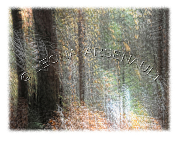 IMPRESSIONISTIC;LENS CREATION;ABSTRACT;FOREST;TREES;HORIZONTAL