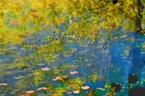 IMPRESSIONISTIC;LENS_CREATION;DIGITAL_ART;ABSTRACT;LEAVES;WATER;FALL;WATER;HORIZ