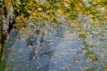 IMPRESSIONISTIC;LENS_CREATION;DIGITAL_ART;ABSTRACT;LEAVES;FALL;WATER;HORIZONTAL