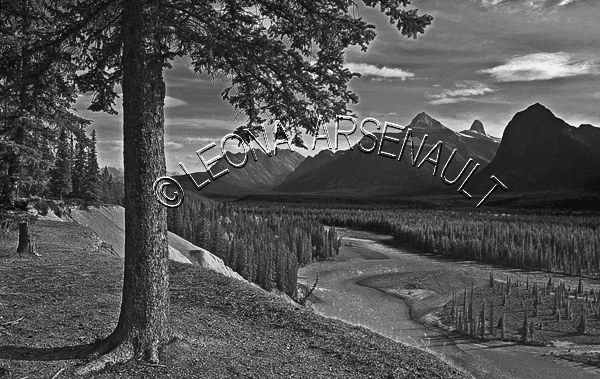 CANADA;ALBERTA;BANFF NATIONAL PARK;CANADIAN ROCKIES;ROCKY MOUNTAINS;ICEFIELD PARKWAY;FALL;WATER;TREE;LANDSCAPE;SCENIC;BLACK AND WHITE;HORIZONTAL