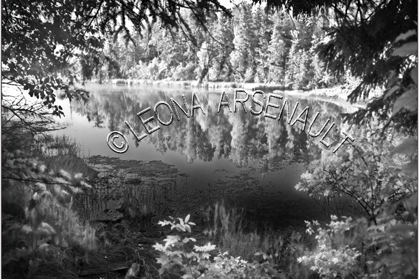 CANADA;PRINCE EDWARD ISLAND;PRINCE COUNTY;CAMP TAMAWABY;FOREST;WATER;REFLECTION;BLACK AND WHITE;LANDSCAPE;SCENIC;HORIZONTAL;