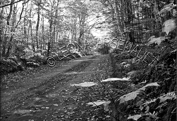 CANADA;PRINCE EDWARD ISLAND;QUEEN'S COUNTY;FREDERICTON;WARBURTON ROAD;FOREST;RED CLAY ROAD;PATH;LANE;TREES;BLACK AND WHITE;LANDSCAPE;SCENIC;HORIZONTAL