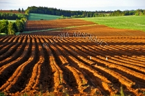 CANADA;PRINCE_EDWARD_ISLAND;QUEENS_COUNTY;NEW_LONDON;POTATO_FIELD;FIELD;FARMING;