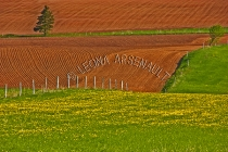 CANADA;PRINCE_EDWARD_ISLAND;QUEENS_COUNTY;HUNTER_RIVER;ROLLING_HILLS;HILLS;RED_S