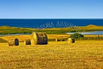 CANADA;PRINCE_EDWARD_ISLAND;QUEENS_COUNTY;PARK_CORNER;HAY_FIELDS;FIELDS;HAY_BALE