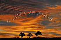 CANADA;PRINCE_EDWARD_ISLAND;PRINCE_COUNTY;ABRAM_VILLAGE;TREES;SILHOUETTES;FALL;S